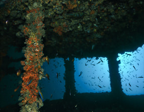 wreck diving khao lak thailand